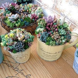 多肉植物 寄せ植え そのまま飾れます♪ブリキカップ(その他)