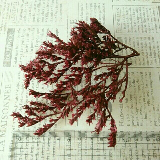 【セール増量中】タタリカ  チェリーレッド  約3g→6g  ハンドメイドのフラワー/ガーデン(ドライフラワー)の商品写真