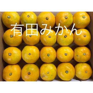 有田みかん 品種「日南早生」No40 お試し用 和歌山(フルーツ)