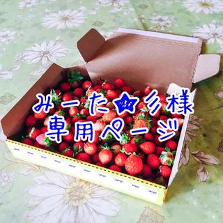 【生・加工用】夏秋いちご 販売テスト 内容量約1kg(フルーツ)