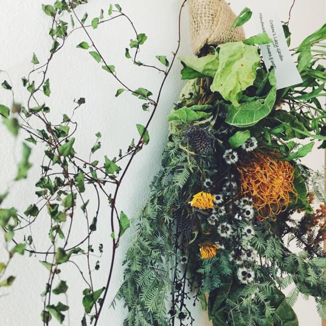 ピンクッション ミモザ  ワイヤープランツのロングスワッグ   Tangling ハンドメイドのフラワー/ガーデン(ドライフラワー)の商品写真