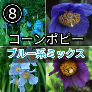 【ポピー⑧】コーンポピーブルー系ミックス 種子30粒(その他)