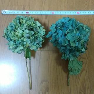 アジサイ ドライフラワー 青緑~黄緑紫2 紫陽花(ドライフラワー)