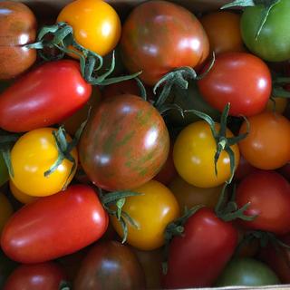 カラートマト 1キロ(野菜)