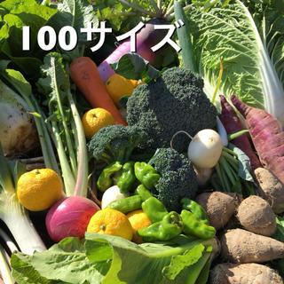 低農薬 野菜セット 100(野菜)