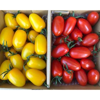 フルーツトマトアイコ  1キロ(野菜)