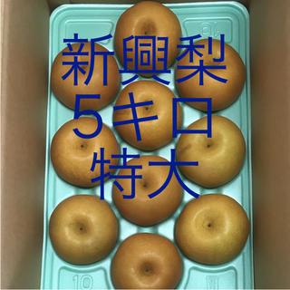 新興梨   ご家庭用   5キロ   特大(フルーツ)