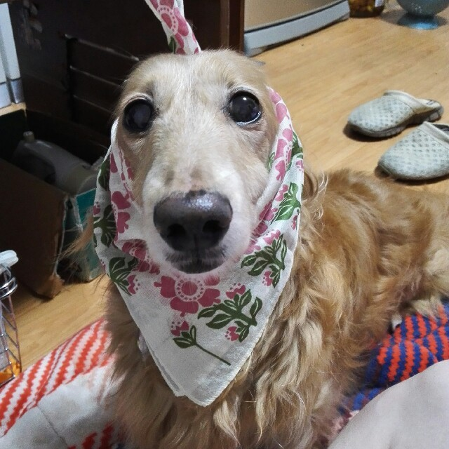 ikukoさん専用 その他のペット用品(犬)の商品写真