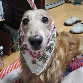 ikukoさん専用(犬)