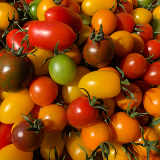 カラーミニトマトミックス  1キロ(野菜)