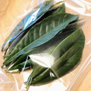 新鮮ビワの葉 30枚プラスおまけ(茶)
