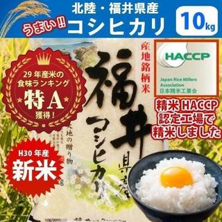 福井県産こしひかり(水仙)10kg 送料無料!(米/穀物)