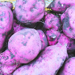 サツマイモ3種セット 100サイズパンパン(野菜)
