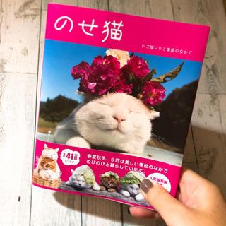 【値下げします!】のせ猫 かご猫シロと季節のなかで/SHIRONEKO