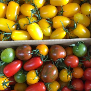 piiko6280様専用 イエローアイコ カラートマト (野菜)