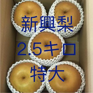 新興梨   ご家庭用  2.5キロ   特大(フルーツ)