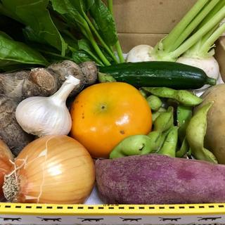淡路島【 ¥1000 】10種 ミニ野菜set(野菜)