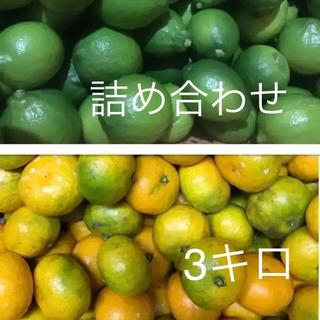 柑橘詰め合わせ  箱込みで3キロ(フルーツ)