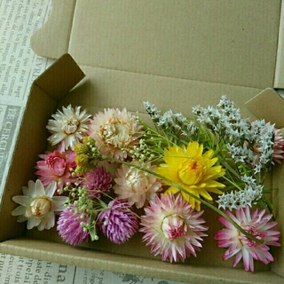 ドライフラワーの花材セット  ブライトピンク系3(ドライフラワー)