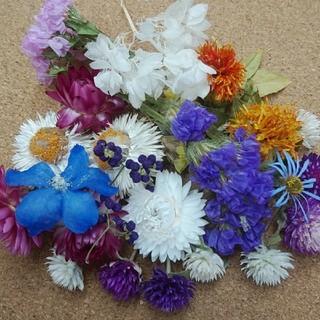 花材51 ドライフラワー ヘッドのセット ハーバリウムやアロマワックスバーに(ドライフラワー)