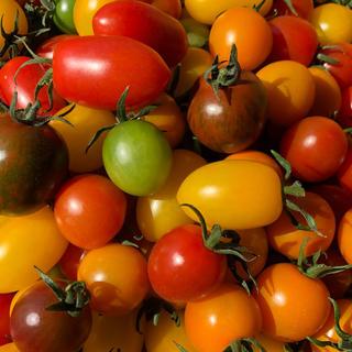 カラーミニトマト ミックス(野菜)