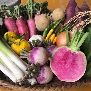 京都府産  無農薬 詰め合わせ オーガニック 60サイズ 秋冬野菜セット 贈り物(野菜)