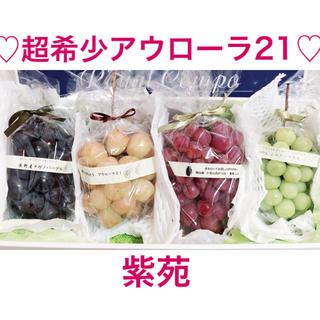 ぶどう  超希少  アウローラ21  紫苑しえん シャインマスカット ナガノパー(フルーツ)