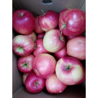 山形県産 りんご 【 ジョナゴールド 】バラ詰め 約10kg(フルーツ)