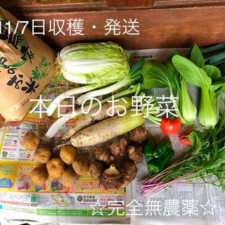 完全無農薬 お野菜詰め合わせ 【復活版】 数量限定 80-100サイズ(野菜)