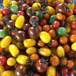カラートマト ミックス(野菜)