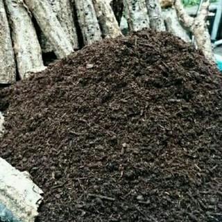 送料無料!栄養価抜群の天然発酵カブトムシマット 幼虫がビッグサイズになります(虫類)