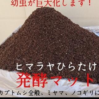 とーさん様専用 ヒマラヤひらたけ発酵カブトムシマット 80リットル送料込み(虫類)