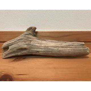 流木【47】(爬虫類/両生類用品)