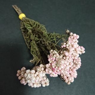 セール品☆ ライスフラワー ピンクホワイト② 【ドライフラワー花材】(ドライフラワー)