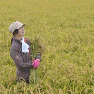 令和元年産 秋田県特別栽培米あきたこまち 生産者です(米/穀物)