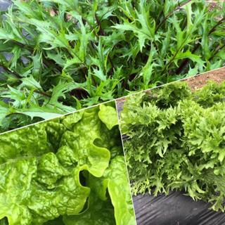 セール!葉物セット❤️てんこ盛りセット(野菜)