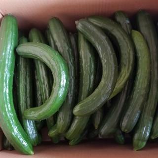 《ゆう97609544様専用》訳ありキュウリ5kg(野菜)