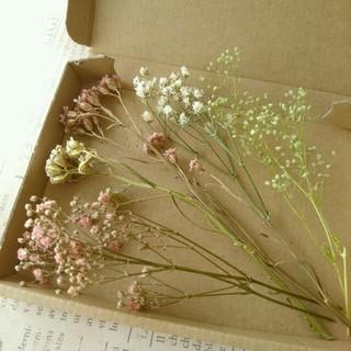 ドライフラワー  小花の花材セット②(ドライフラワー)