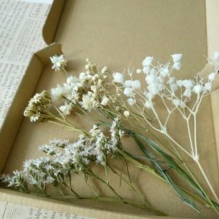 ドライフラワー  ホワイト小花の花材セット(ドライフラワー)