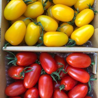フルーツトマト アイコセット(野菜)
