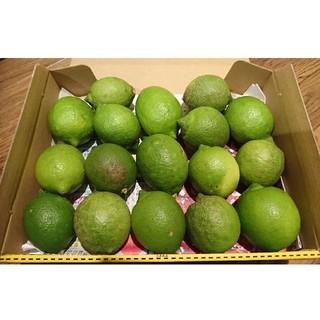 広島県大崎下島産 無農薬グリーンレモン 約1.2キロ(フルーツ)