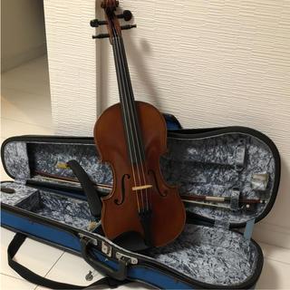 ピグマリウス  バンビーノ   バイオリン(ヴァイオリン)