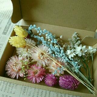 ドライフラワーの花材セット  パステル系6(ドライフラワー)