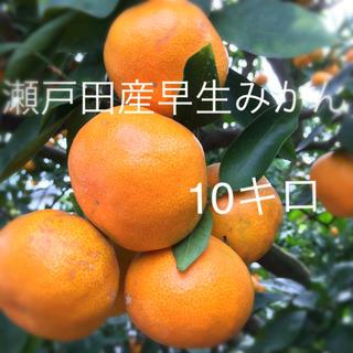 瀬戸田産 早生みかん 10キロ(フルーツ)