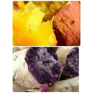 1キロ 無農薬 紫芋 べにはるかB品