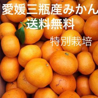 愛媛三瓶産みかん  5キロ Sサイズ  早生みかん(フルーツ)