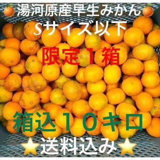 限定1箱★訳あり 神奈川県湯河原産 産直 早生みかんSサイズ以下10kg箱込み(フルーツ)