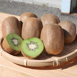 【送料無料】産地直送 和歌山県産 キウイフルーツ 10kg 訳あり(フルーツ)