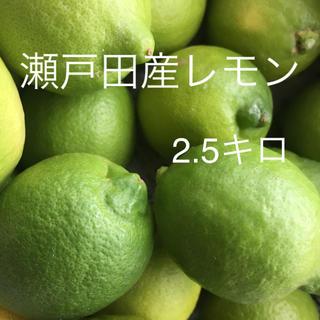 瀬戸田グリーンレモン(フルーツ)