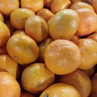 激甘品 熊本みかん小粒約10kg 数限定(フルーツ)